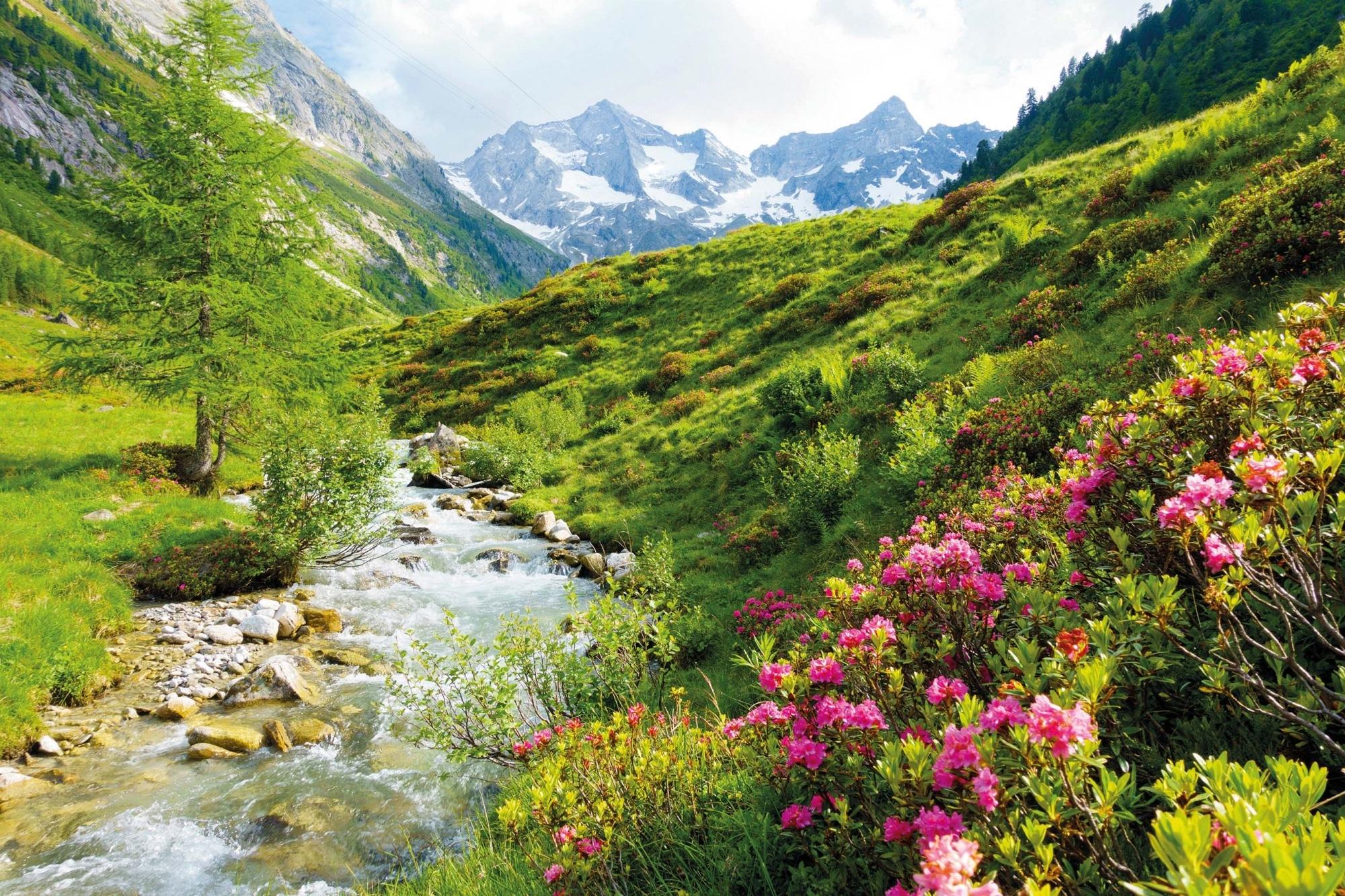 Tirol, Bergsommer, Alpenrosen am Hochgebirgsbach