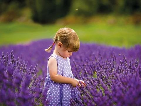 Lavendel Pfingsten Mädchen