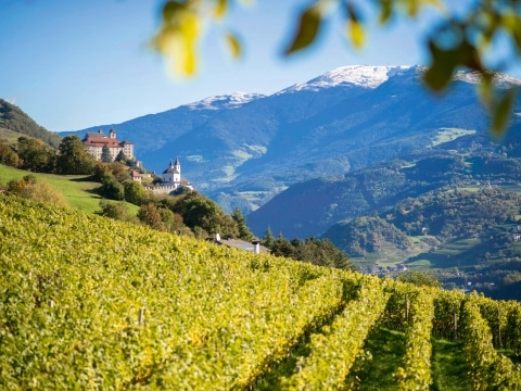 Törggelen Südtirol ©IDM_Südtirol_Alex Filz