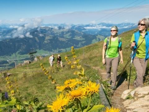 Alpenblumengarten am Kitzbüheler Horn © Adobe Stock