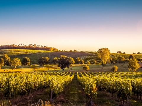 Weinlandschaft, Bordeaux