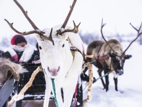 Tromso_Rentier