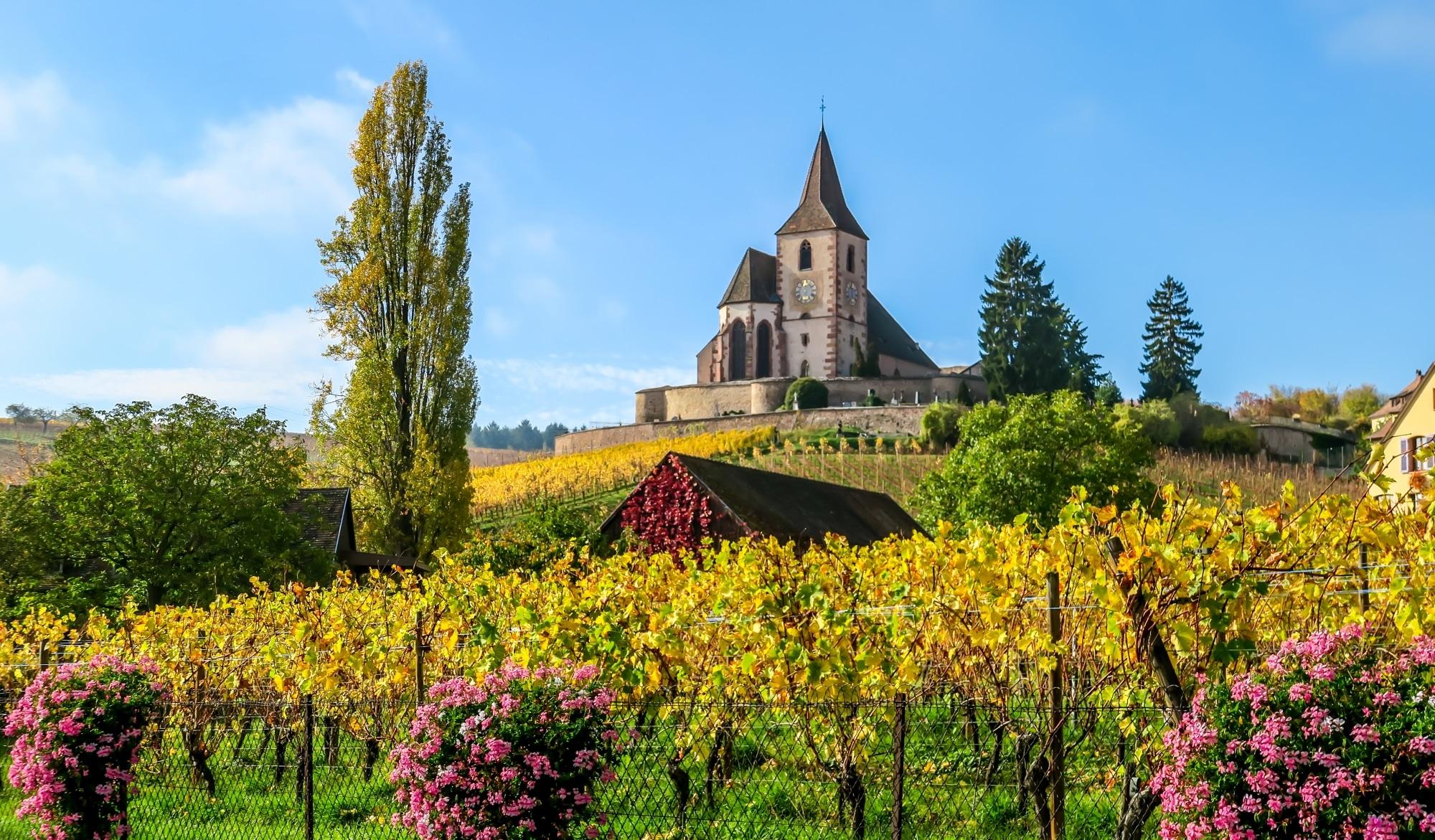 Weinlandschaft Elsass
